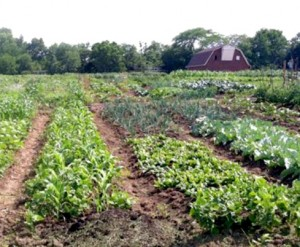 global greens - transformational generosity